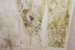 Грибок и плесень на стенах. Способы устранения